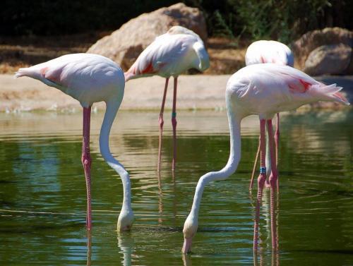 Zoo de Atenas