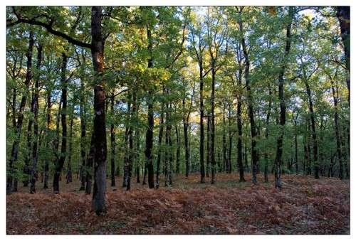 Bosque Foloi