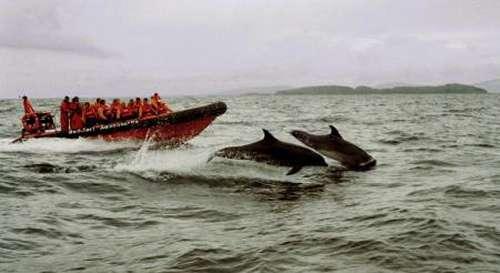 Delfines en Grecia