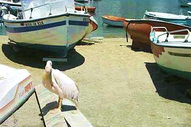 Puesta de sol en Mykonos, con mascotas