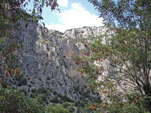 El conjunto forestal de Osa