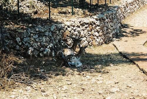 Askos, el parque de piedra de Zante
