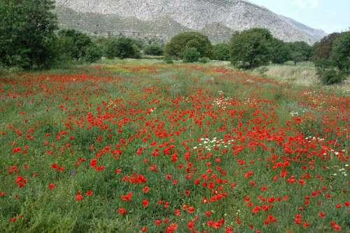 Parque Nacional Tilos