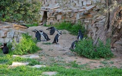 Zoo de Atica